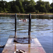 Serpentine swimmer, Hyde Park by Steve Rutherford