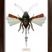 Mark Oliver, Fanlighter Fly. Image courtesy and copyright of the artist.