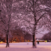 Trees covered with snow in London Fields, by Stephen Barber on Flickr